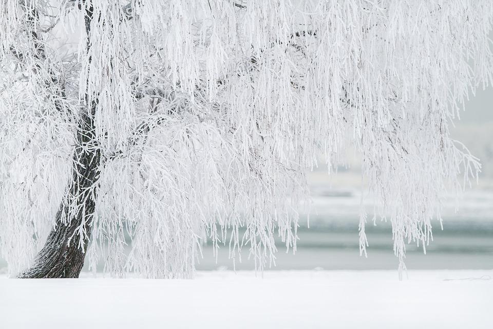 winter-frozen-tree