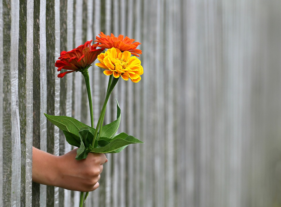 Wooden fence with a hand through it holding yellow orange and red flowers