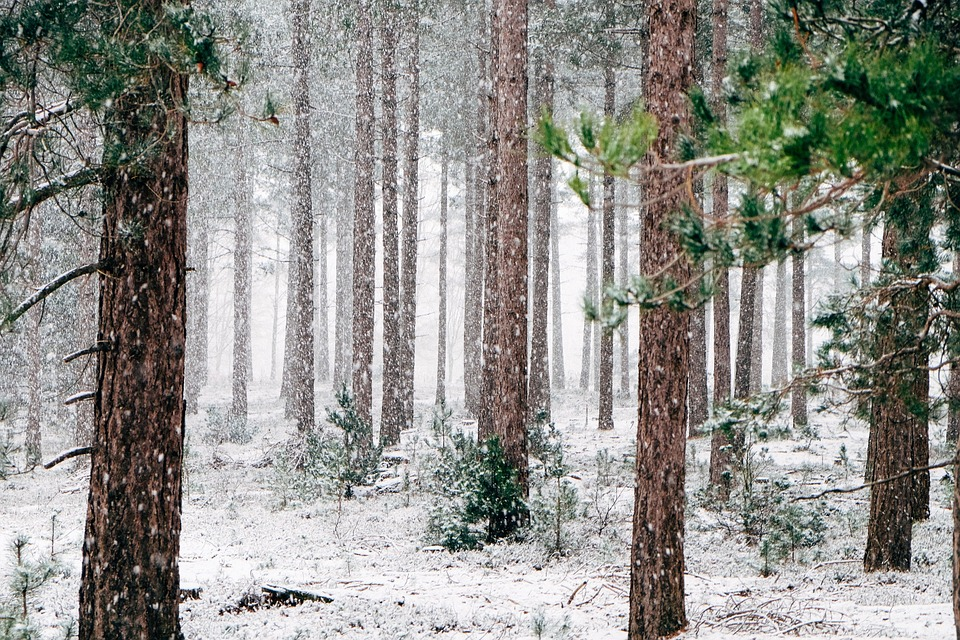 Forest in December